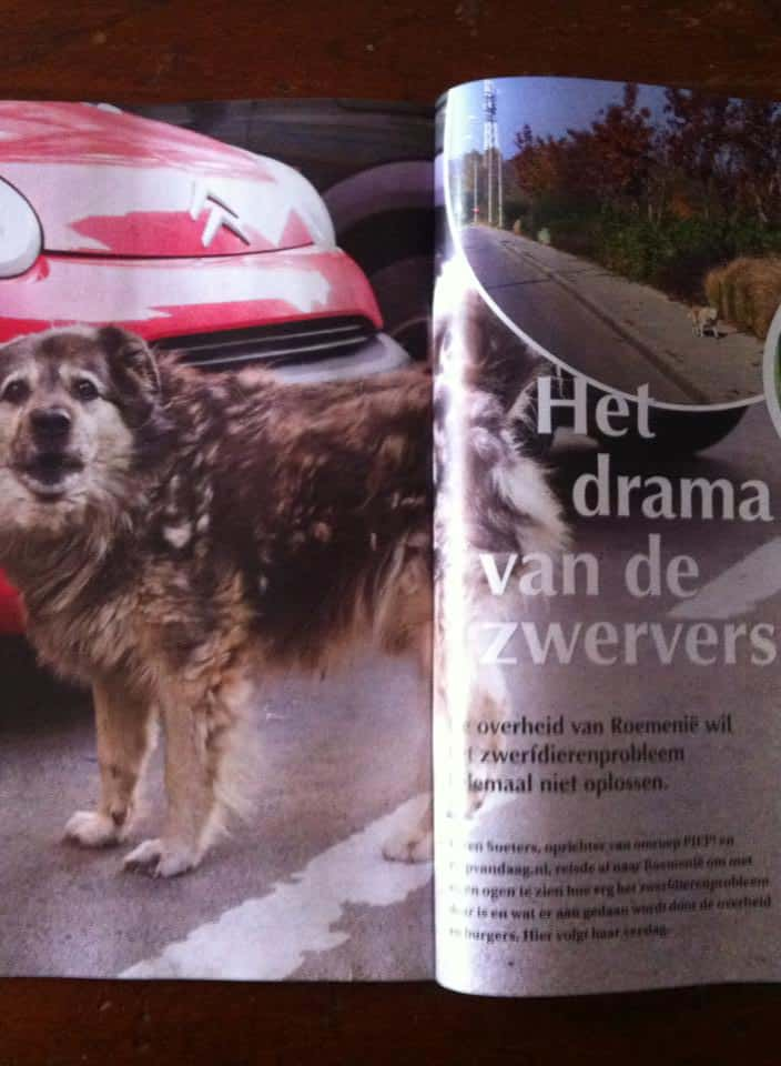 Karen Soeters - Roemenië - Hart voor Dieren