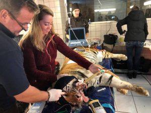 Karen Soeters bij operatie tijger