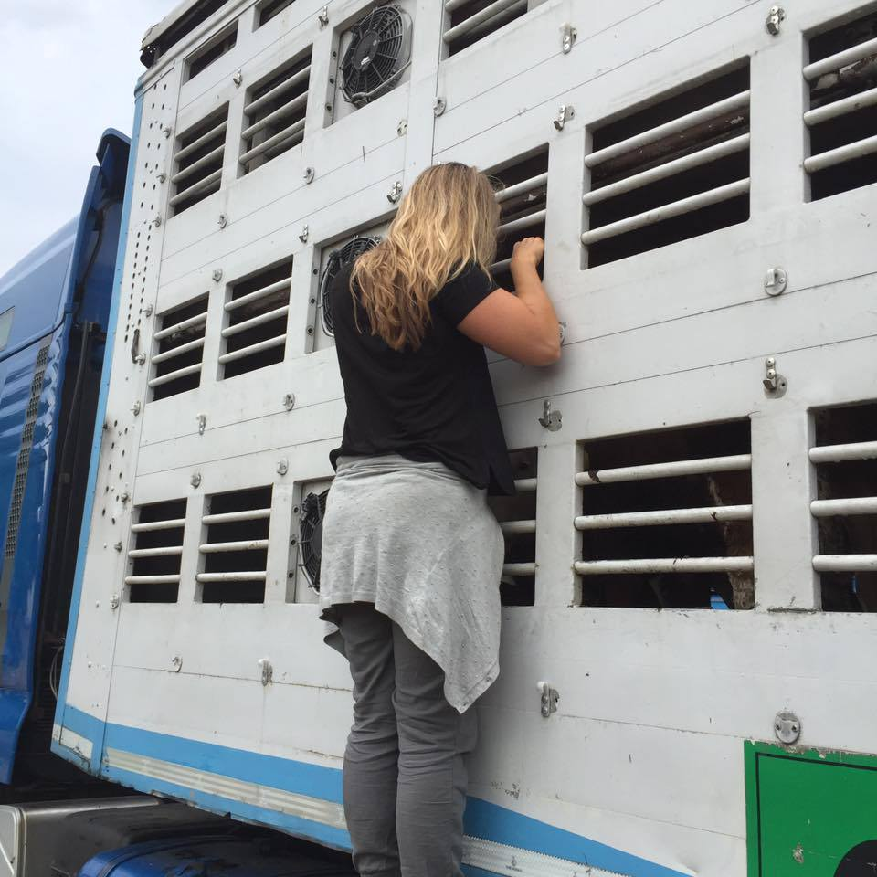 Karen Soeters veetransport Eyes on Animals